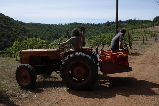 ブドウをトラクターで運ぶ